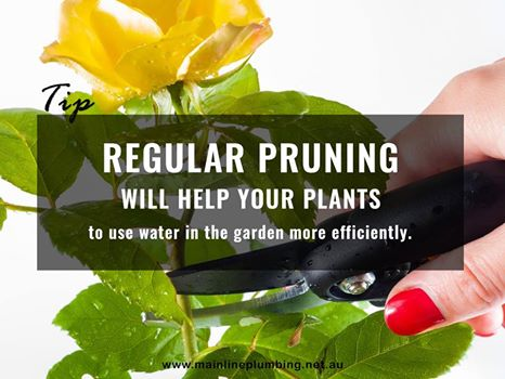 Regular pruning